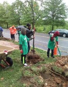 Earth Squad members work on planting trees.  Carolyn Lambright-Davis